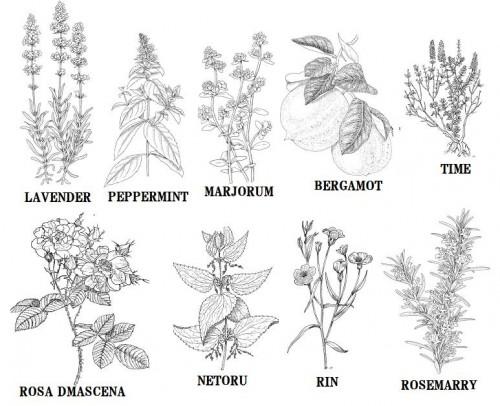 lavender集合